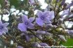 Flor de árbol en Selva Ecuatoriana