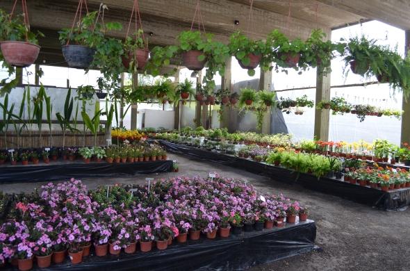 Fiesta nacional de la flor en escobar parte ii maravillate for Viveros en maldonado