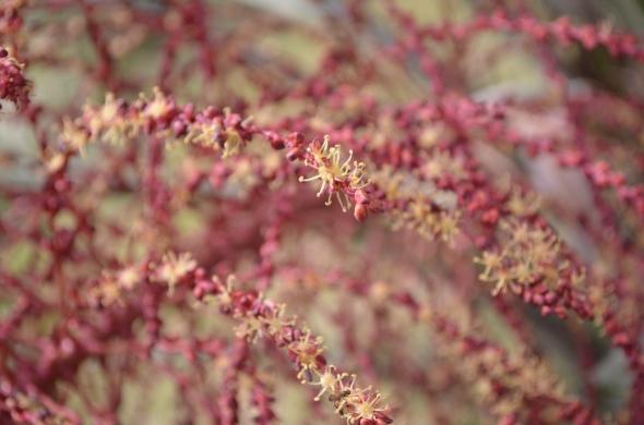 flor de una palmera