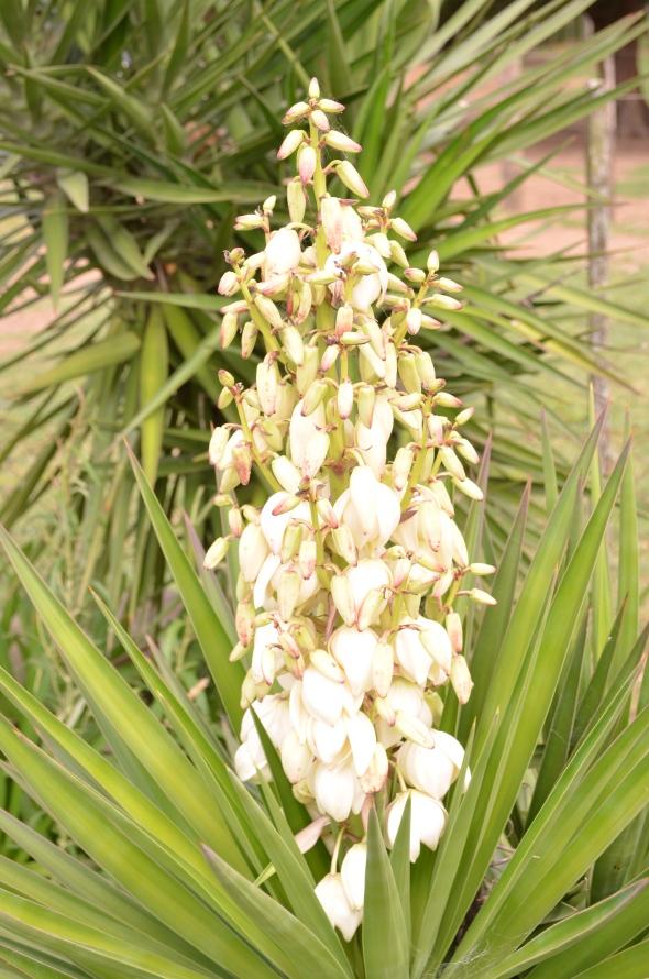 flor de una especie de palmera pequeña