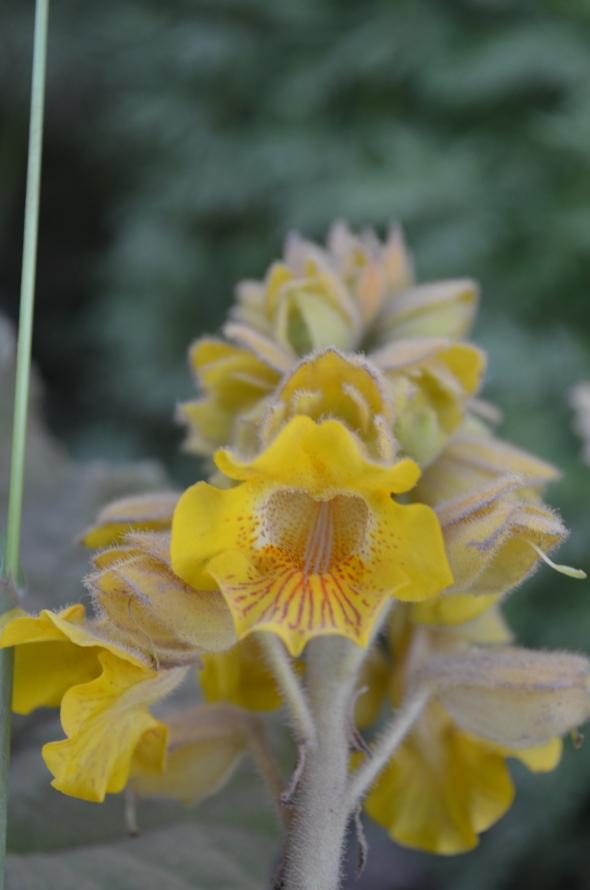 hermosa flor del camino en San Pedro, Argentina
