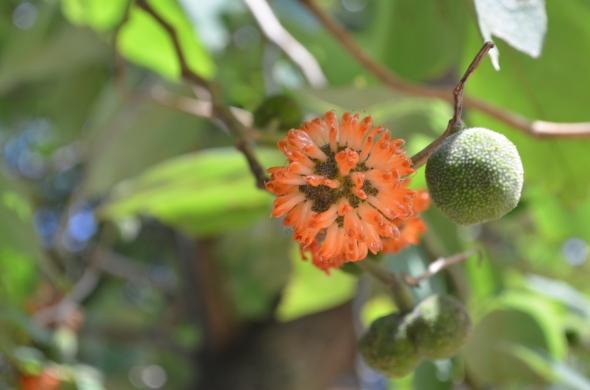 Al ver esto pensé es un fruto desde el cual está saliendo la flor, pero aún no estoy convencida de mi propia hipótesis.