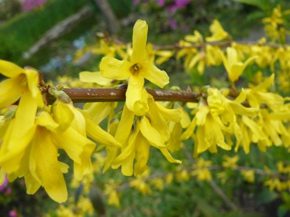 Flores amarillas del camino