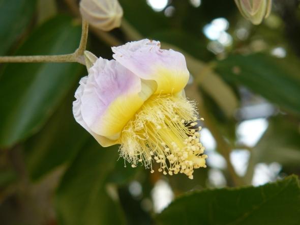 flor lila y amarilla