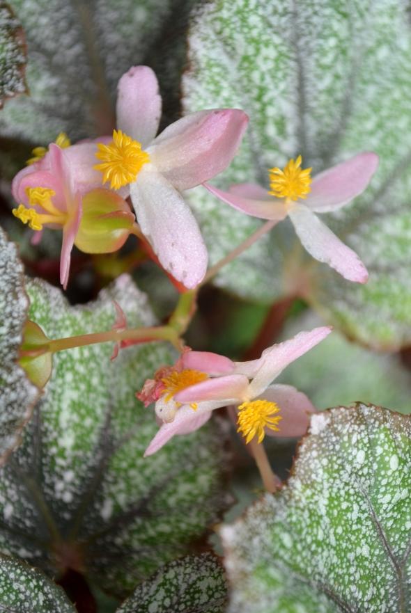 florecitas rosa pálido