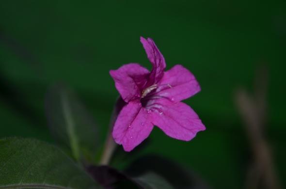 Una flor de mi jardín