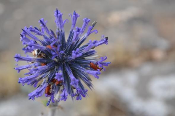 Esta hermosura parece ser un imán para ciertos insectos.