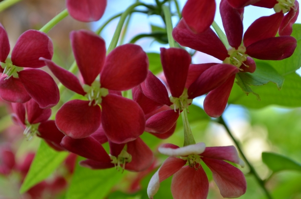 Pequeña flor roja