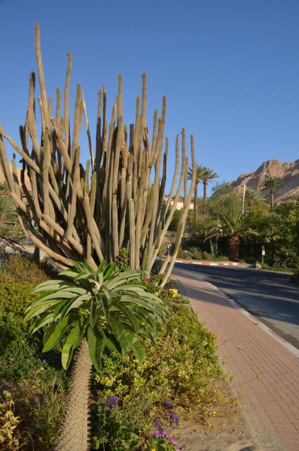 Otros Cactus