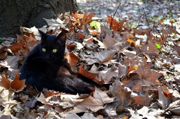 La tarde en Buenos Aires estaba fría y el cielo persistía en mostrarse nublado, salvo por breves instantes en que el sol prevalecía y allí, en el jardín, sobre un colchón de hojas bajo el tenue sol, descansaba este gato.