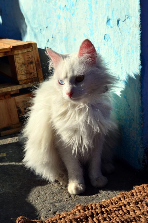 Lulú una hermosa gata blanca que suele hacernos breves visitas.