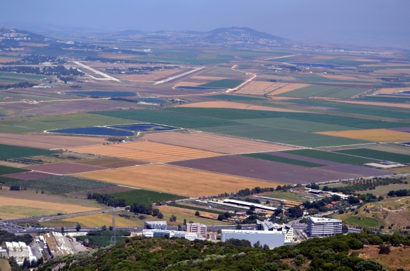 Plantíos en el Monte Carmelo