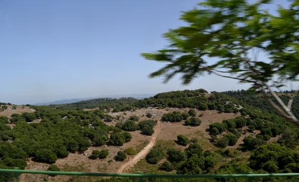 Monte Carmelo en verde