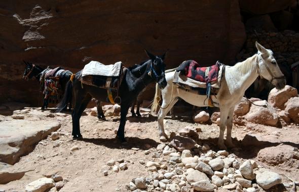 Más burritos en Petra, Jordania