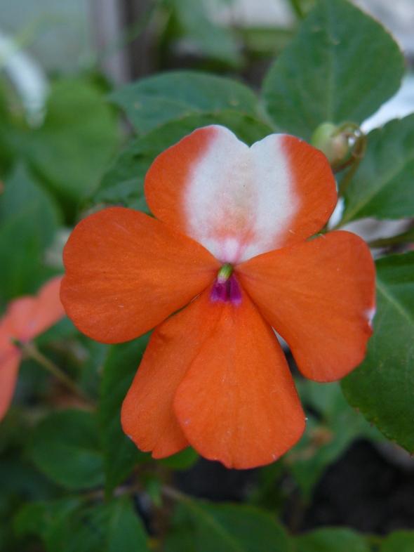 alegría naranja