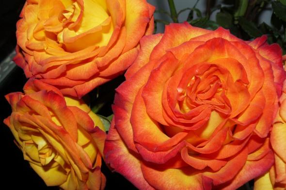 Rosas naranja y amarillas