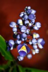 flor azul, amarilla y blanca