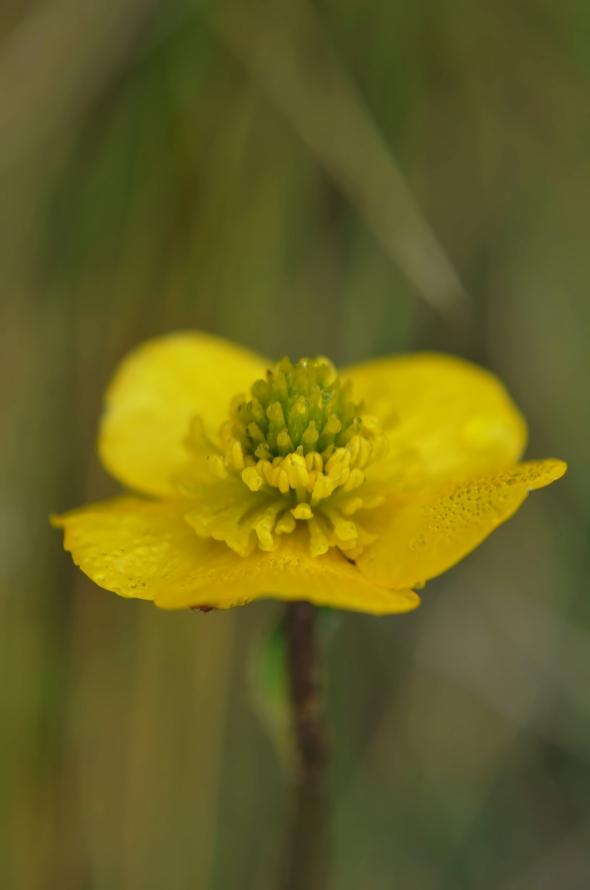 Flor amarilla con rocío matinal