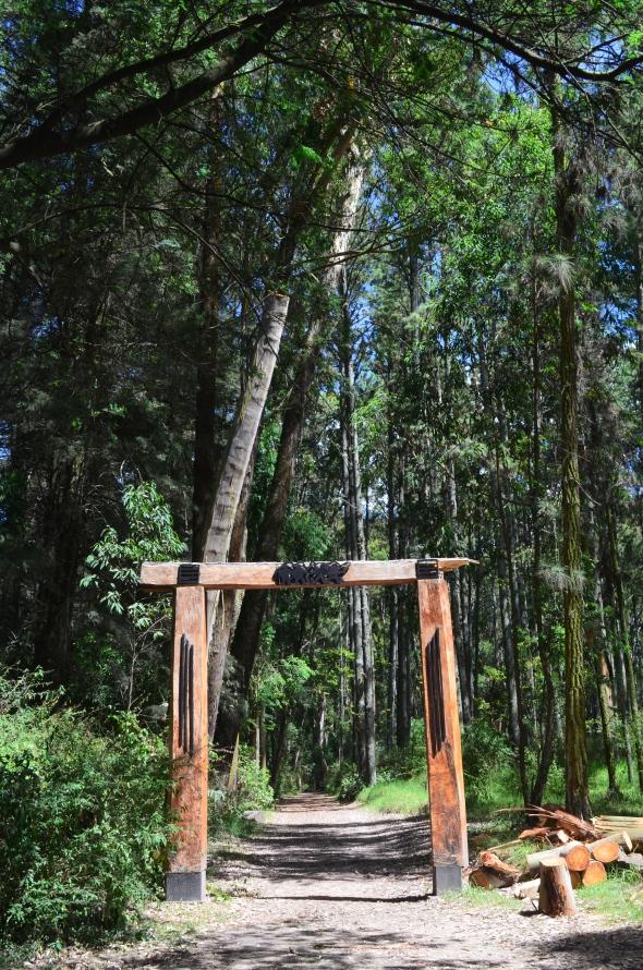 Uno de los ingresos al bosque