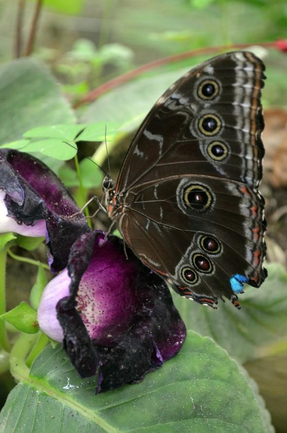 mariposa sobre flor1