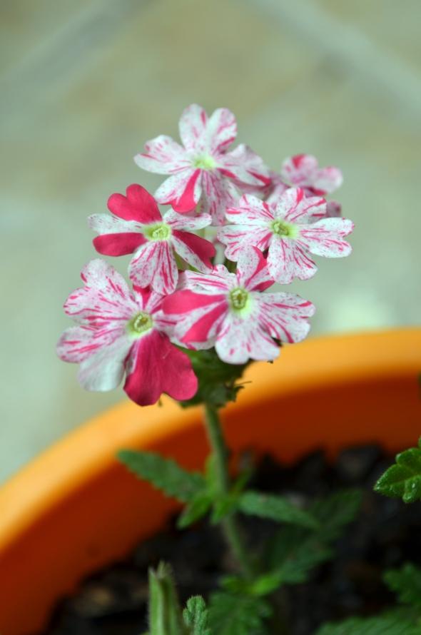 Pequeña flor matizada