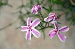 flor blanca y lila