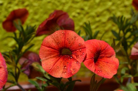 pequeñas flores