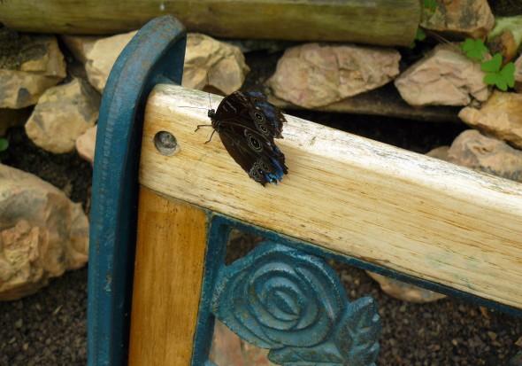 Mariposa descansando