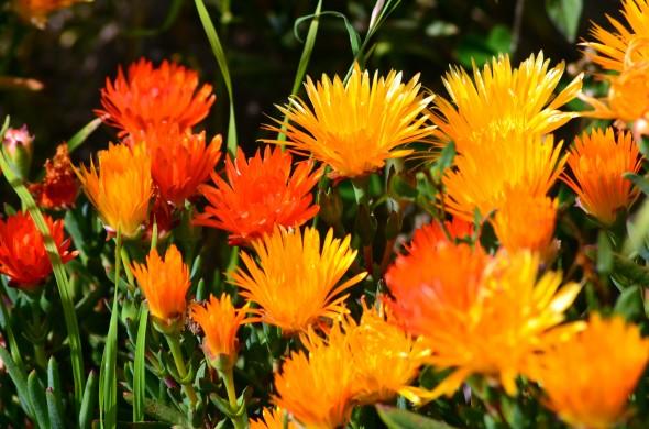 Rayitos de sol amarillos y naranjas