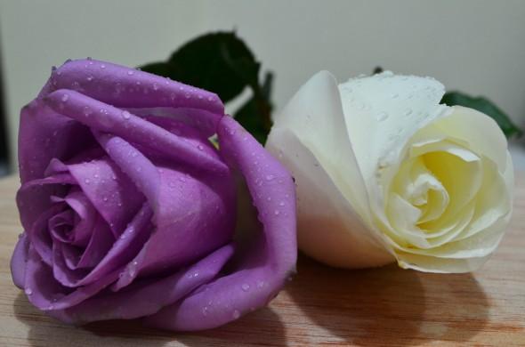 rosa lila y blanca