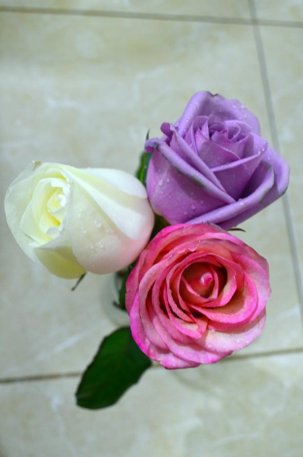 pequeño ramo de rosas, blanca, lila y rosa